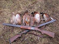 охота подмосковье заказать бронировать фазана собаками