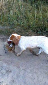 охота фазанов подмосковье фото №100