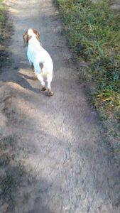 охота фазанов подмосковье фото №103