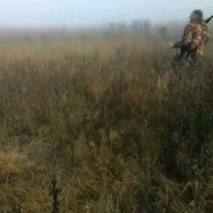 охота фазанов подмосковье фото №104