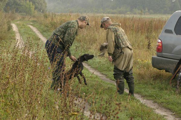 охота фазанов подмосковье фото №11