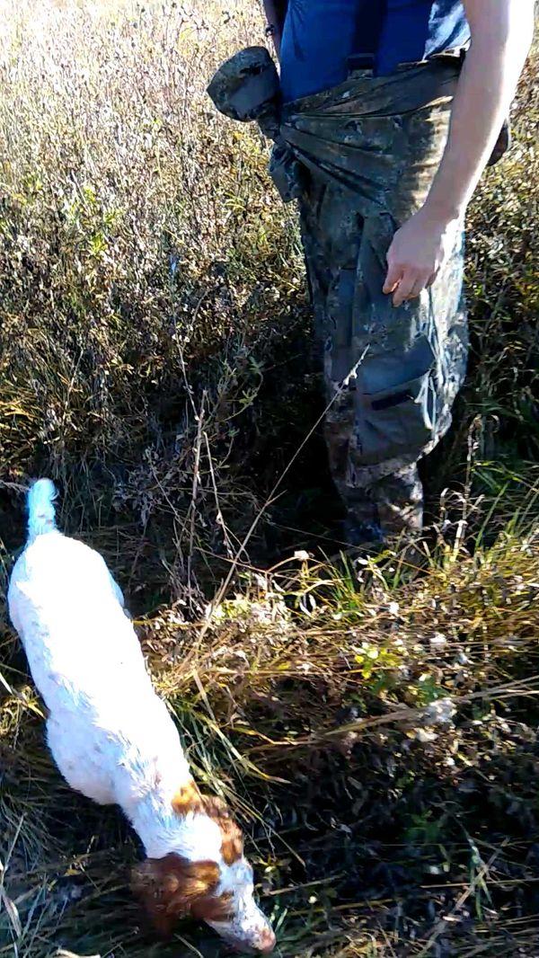 охота фазанов подмосковье фото №111