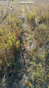 охота фазанов подмосковье фото №121