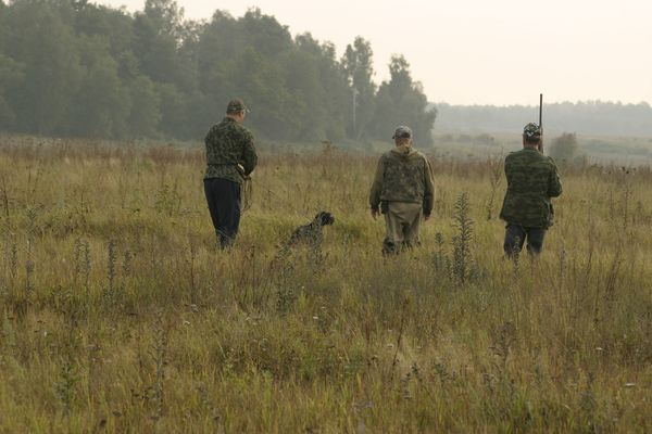 охота фазанов подмосковье фото №14