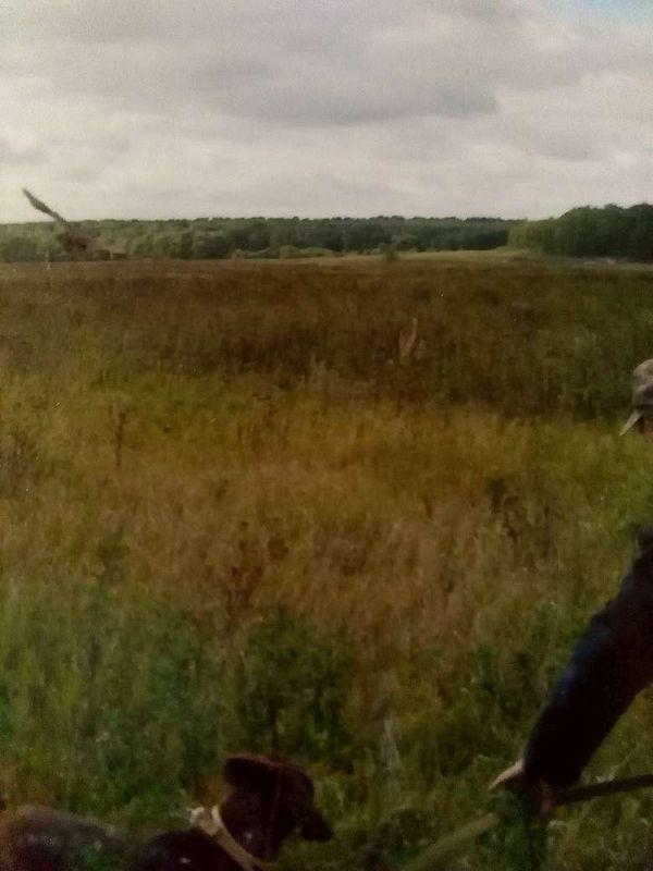 охота фазанов подмосковье фото №146