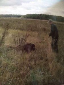 охота фазанов подмосковье фото №152