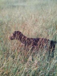 охота фазанов подмосковье фото №169