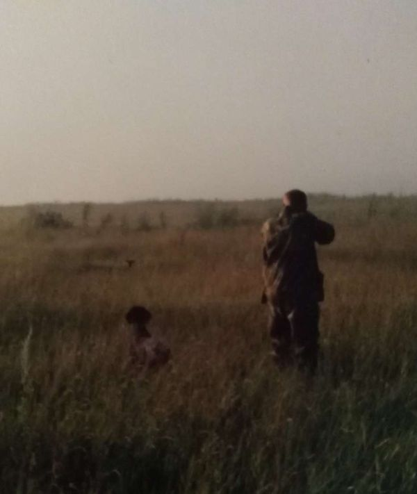 охота фазанов подмосковье фото №170