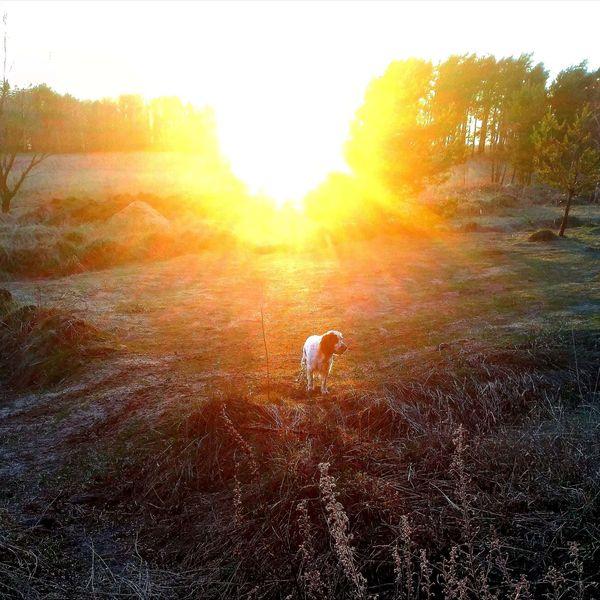 охота фазанов подмосковье фото №189