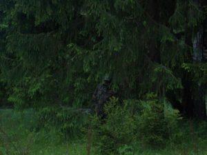 охота фазанов подмосковье фото №195