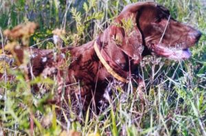 охота фазанов подмосковье фото №202
