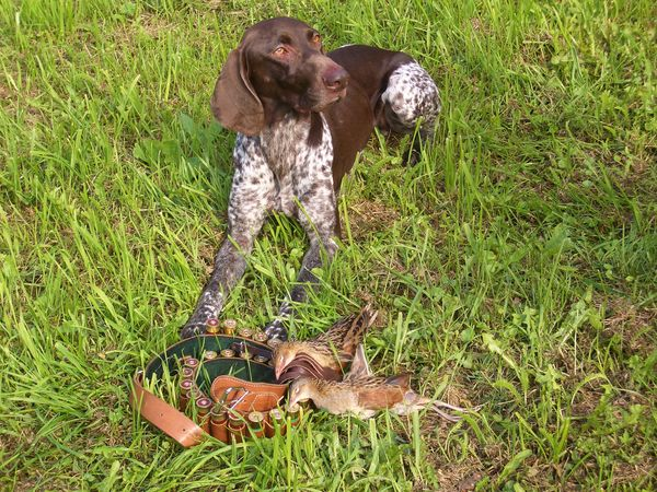 охота фазанов подмосковье, легавая на траве с птицами