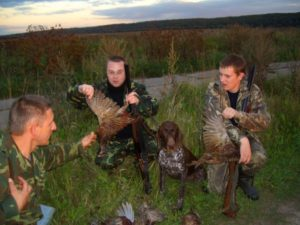 охота фазанов подмосковье фото №223