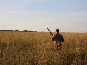 охота фазанов подмосковье фото №229