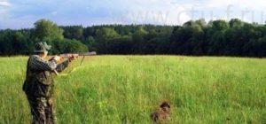 охота фазанов подмосковье фото №23