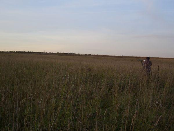 охота фазанов подмосковье фото №231