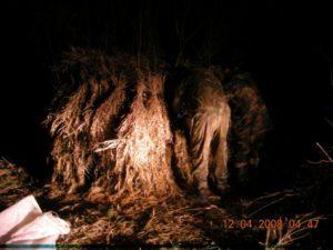 охота фазанов подмосковье фото №242