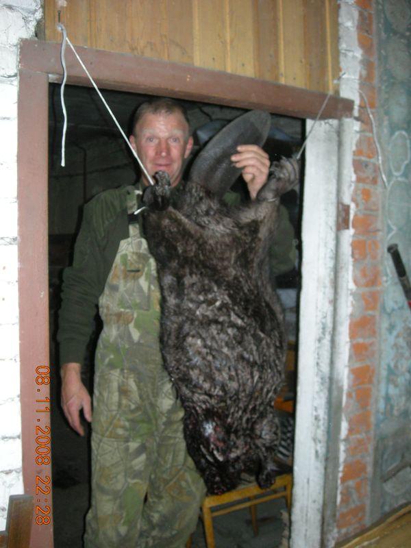 охота фазанов подмосковье фото №252