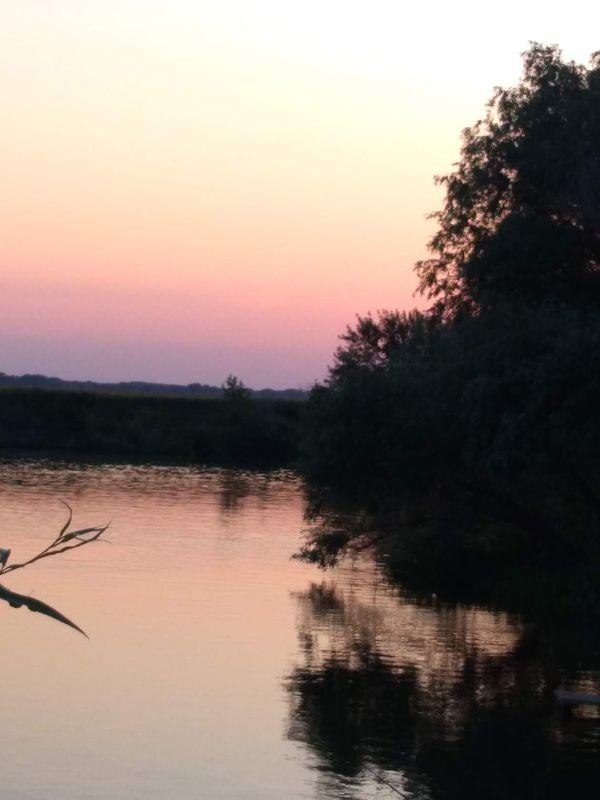 охота фазанов подмосковье фото №258