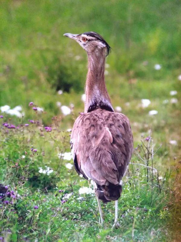 охота фазанов подмосковье фото №265