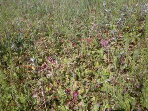 охота фазанов подмосковье фото №275