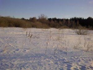 охота фазанов подмосковье фото №279