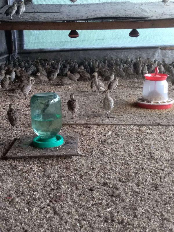 Охота на фазана в Подмосковье фото №282