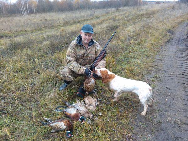 Охота на фазана в Подмосковье фото №300