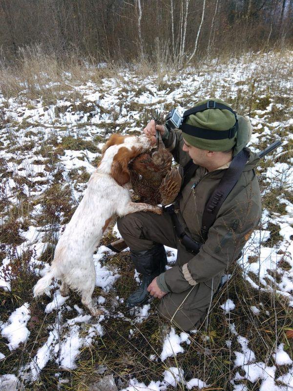Охота на фазана в Подмосковье фото №301