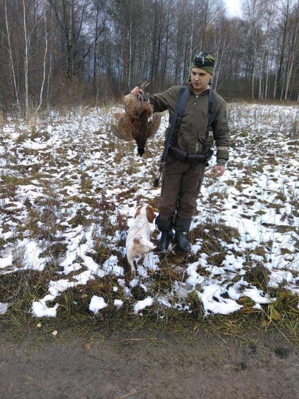 Охота на фазана в Подмосковье фото №303