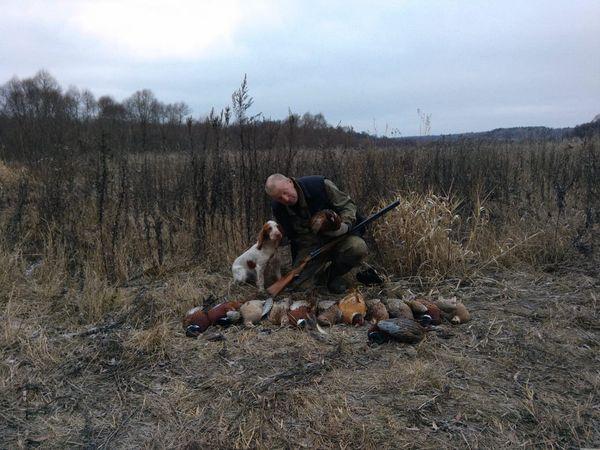 Охота на фазана в Подмосковье фото №306