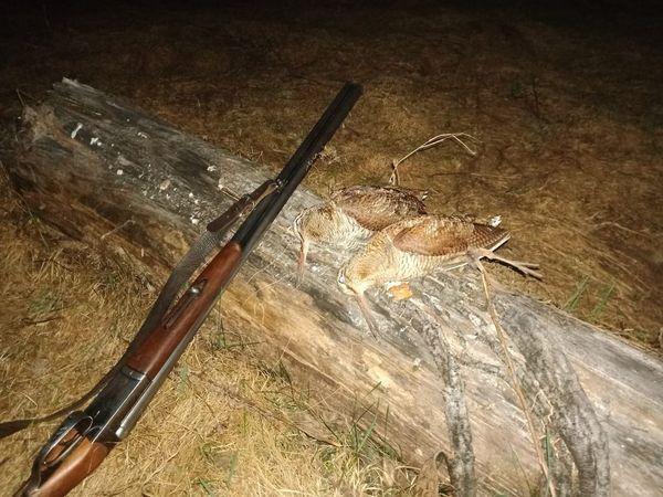 Охота на фазана в Подмосковье фото №316