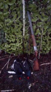 Охота на фазана в Подмосковье фото №324