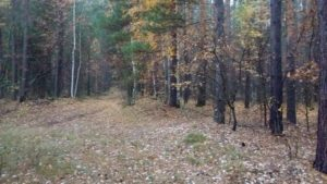 Охота на фазана в Подмосковье фото №326