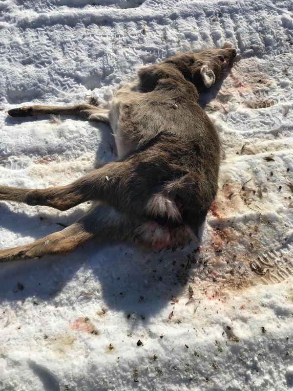 Охота на фазана в Подмосковье фото №330