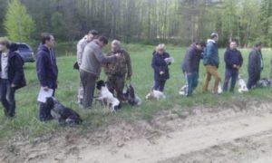 Охота на фазана в Подмосковье фото №331