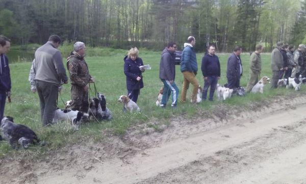 Охота на фазана в Подмосковье фото №333