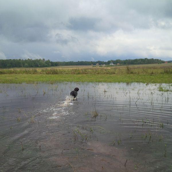 Охота на фазана в Подмосковье фото №339