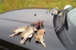 охота фазанов подмосковье фото №34