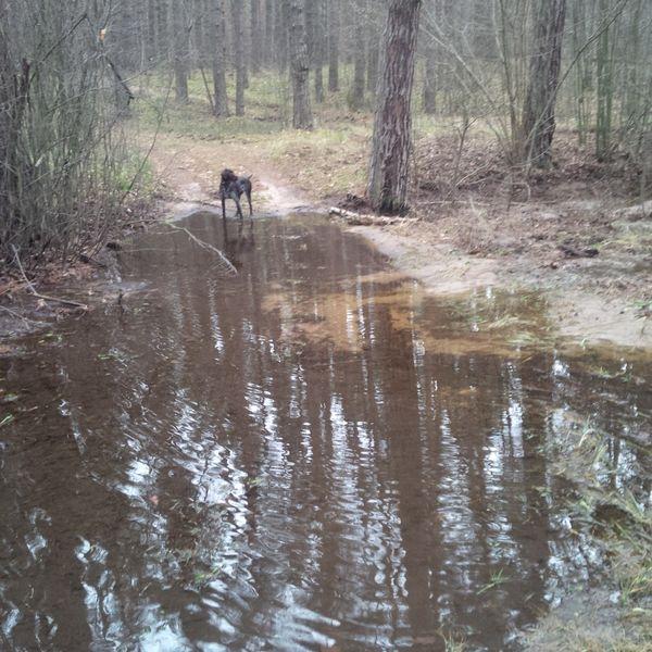 Охота на фазана в Подмосковье фото №341