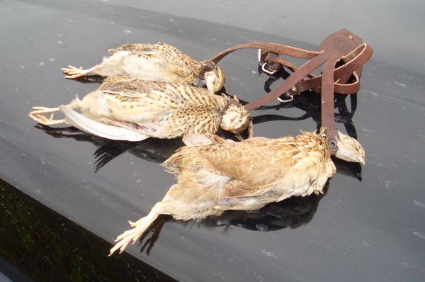 охота фазанов подмосковье фото №35