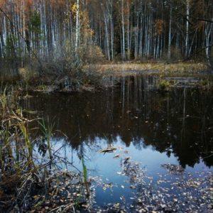Охота на фазана в Подмосковье фото №371