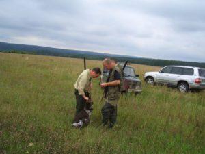 охота фазанов подмосковье фото №41