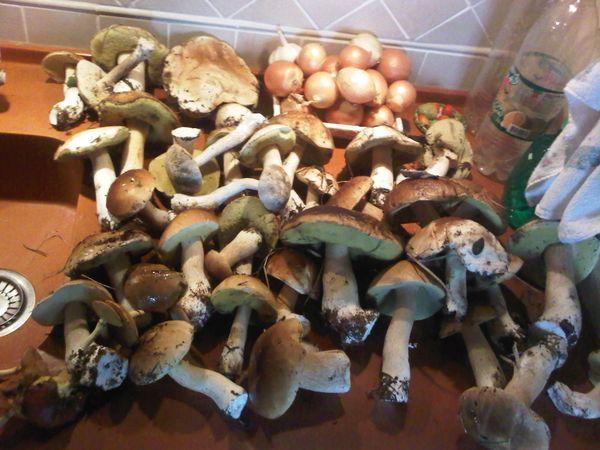 Охота на фазана в Подмосковье фото №413