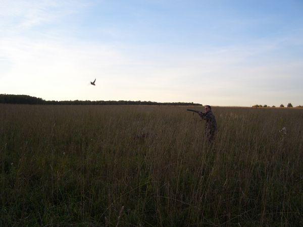 Охота на фазана в Подмосковье фото №416