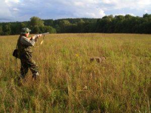 охота фазанов подмосковье фото №43