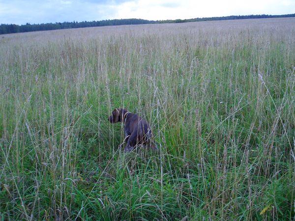 охота фазанов подмосковье фото №45