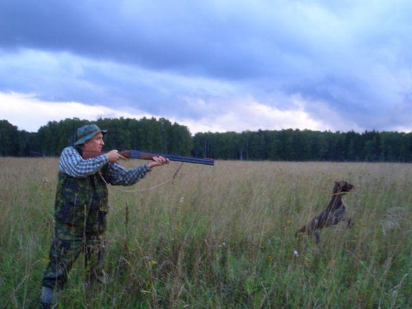 охота фазанов подмосковье фото №46