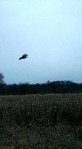охота фазанов подмосковье фото №49