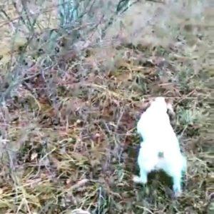 охота фазанов подмосковье фото №51